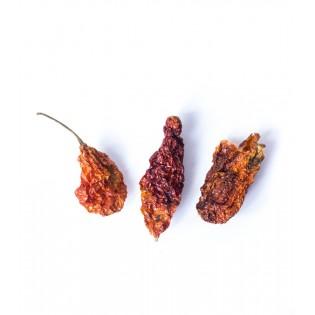 Papryka chilli NAGA JOLOKIA 50g